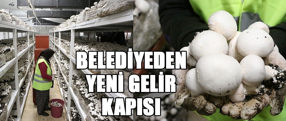 BELEDİYEDEN YENİ GELİR KAPISI...