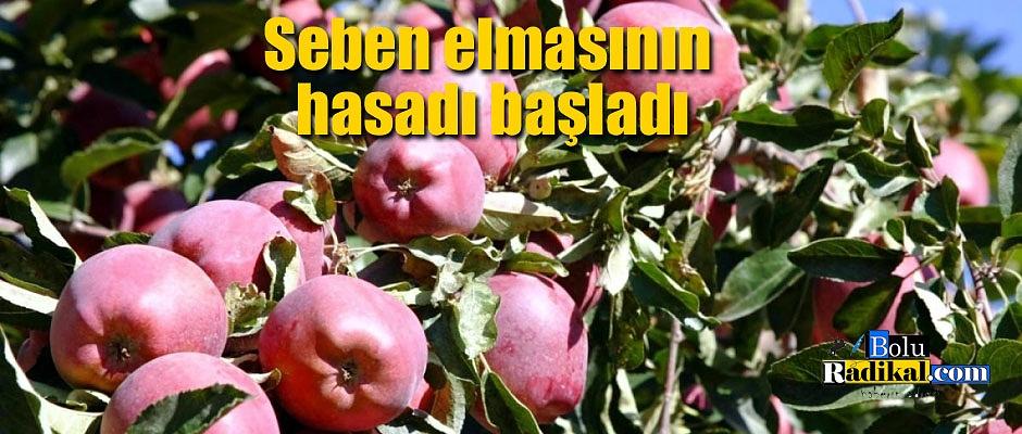 Lezzetiyle ünlü elmanın hasadına başlandı